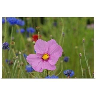 """Pink flower macro."" Poster Print"