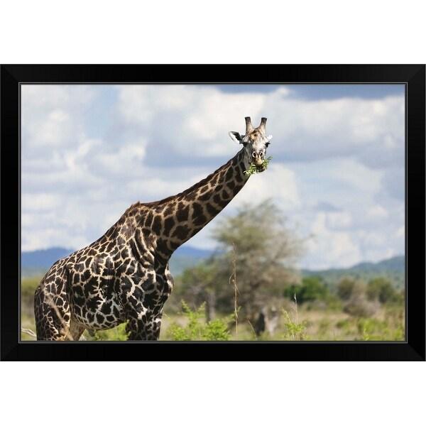 """""""A giraffe in Tanzania, Africa."""" Black Framed Print"""
