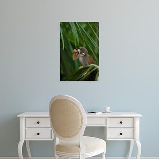 Easy Art Prints Pete Oxford's 'Common Squirrel Monkey Captive' Premium Canvas Art