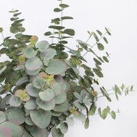 """G Home Collection Artificial Eucalyptus Leaf Stem 26"""" Tall"""