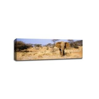 Elephant in Somburu, Kenya - Canvas Poster Art 36x12