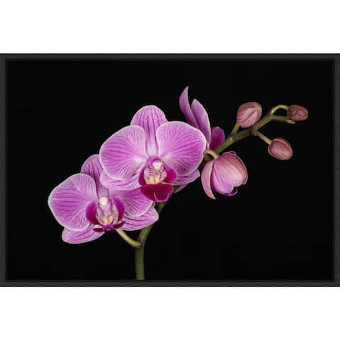 Close-up of fuchsia phalaenopsis orchid, Jaynes Gallery Framed Canvas