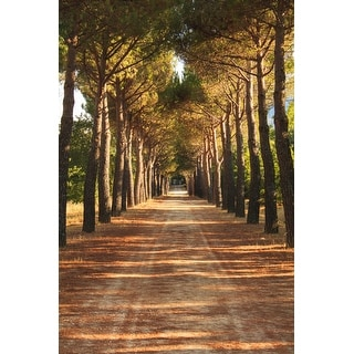 Path And Trees Photograph Art Print