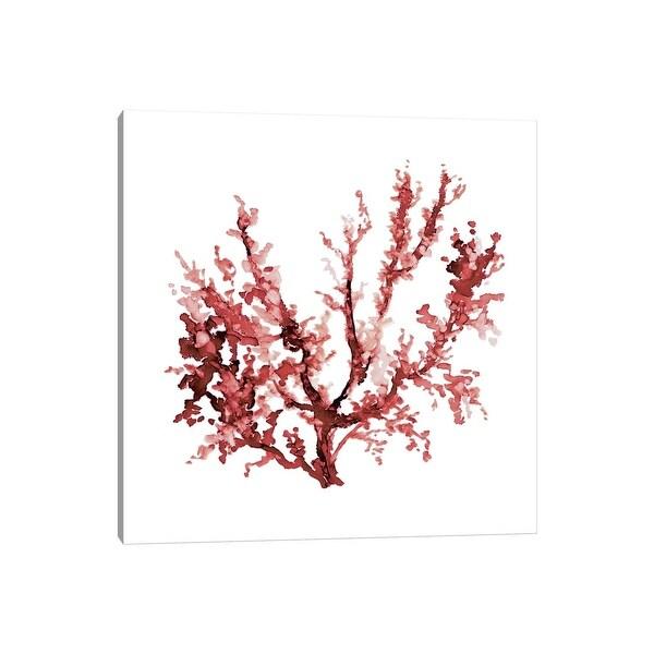 """iCanvas """"Sea Coral III"""" by Carol Robinson Canvas Print. Opens flyout."""