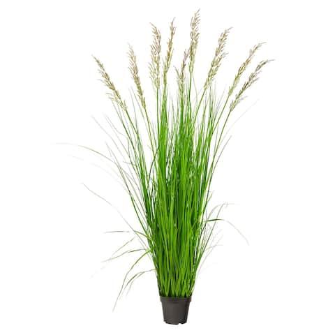 "5.5' Plum Grass Artificial Plant - 6.5"""