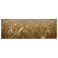 Poster Print entitled Snake looking for mouse in a wheat field - multi-color