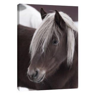 "PTM Images 9-108379  PTM Canvas Collection 10"" x 8"" - ""Horse Frock Flare"" Giclee Horses Art Print on Canvas"
