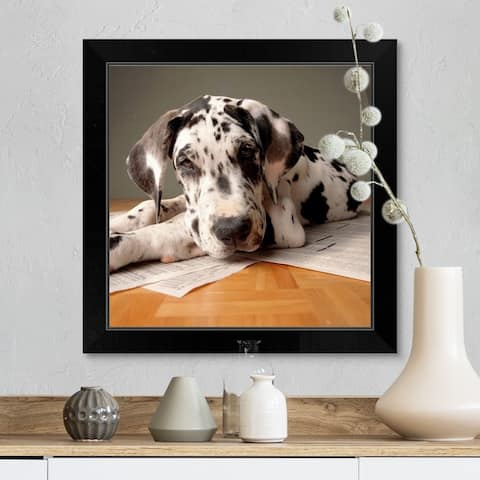 """""""Great Dane Puppy sitting on top of news paper"""" Black Framed Print"""