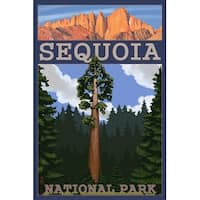 Sequoia Park, CA - Sequoia Tree - LP Artwork (Poker Playing Cards Deck)