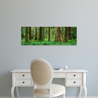 Easy Art Prints Panoramic Image 'Trees in rainforest, Hoh Rainforest, Olympic National Park, Washington' Canvas Art