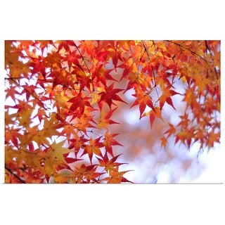 """""""Autumn leaves of Japanese maple, Kyoto."""" Poster Print"""