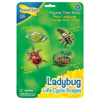 (2 Ea) Ladybug Life Cycle Stages