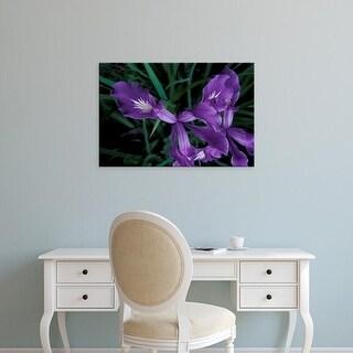 Easy Art Prints Michele Westmorland's 'Oregon Coast Wild Iris' Premium Canvas Art