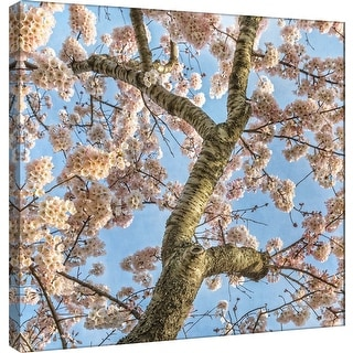 """PTM Images 9-101251  PTM Canvas Collection 12"""" x 12"""" - """"Cherry Blossoms 12"""" Giclee Trees Art Print on Canvas"""