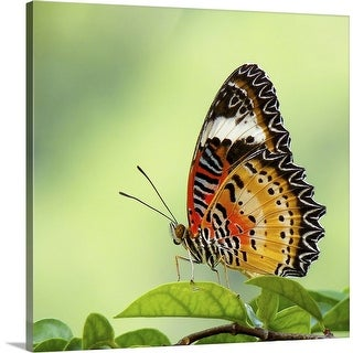 """""""Butterfly on leaves."""" Canvas Wall Art"""