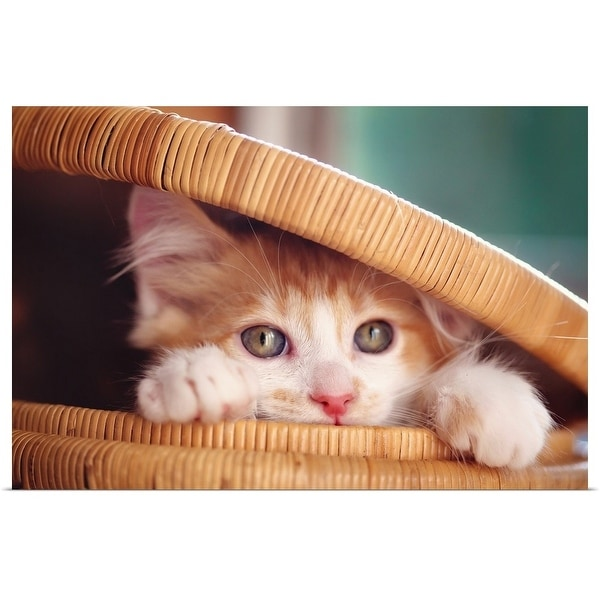 """Orange and white kitten in basket."" Poster Print"