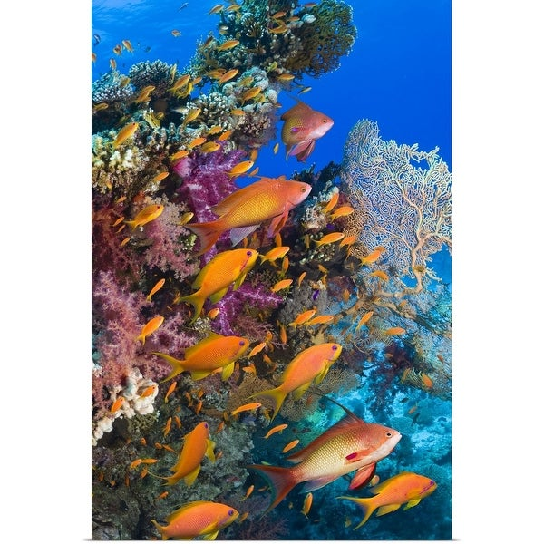 """Goldies on coral reef"" Poster Print"
