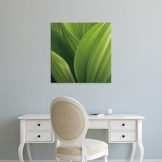 Easy Art Prints Jan Bell's 'Corn Lily' Premium Canvas Art