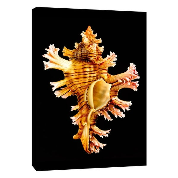 """PTM Images 9-105496 PTM Canvas Collection 10"""" x 8"""" - """"Rose Branch Murex"""" Giclee Shells Art Print on Canvas"""