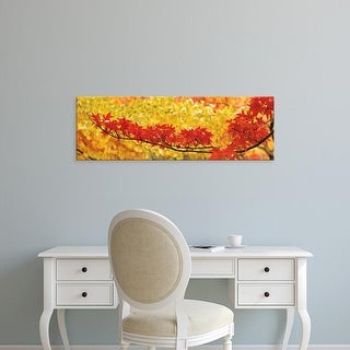 Easy Art Prints Panoramic Images's 'Red and yellow autumnal leaves' Premium Canvas Art