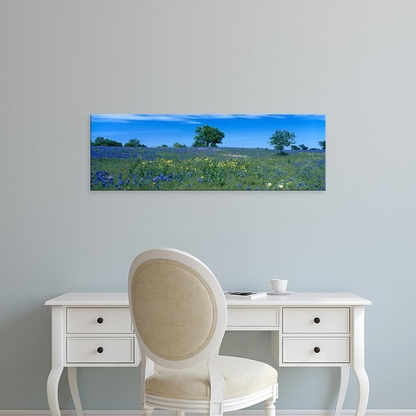 Easy Art Prints Panoramic Images's 'Texas bluebonnets flowers in a field, Texas Hill Country, Texas' Canvas Art