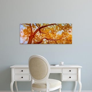 Easy Art Prints Panoramic Images's 'Low angle view of a tree in autumn' Premium Canvas Art