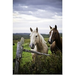 Poster Print entitled Two horses stand near fence in farm field of off highway 915, New Brunswick, Canada - Multi-color