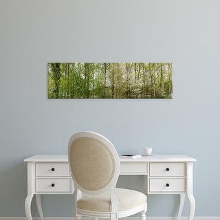 Easy Art Prints Panoramic Images's 'Trees in a forest, Northern Black Forest Region, Horb am Neckar, Baden