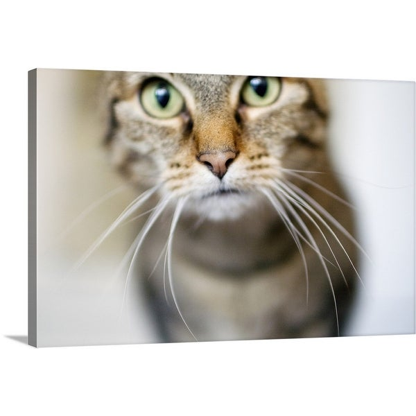 """""""Close up of a cat's face with long whiskers"""" Canvas Wall Art"""