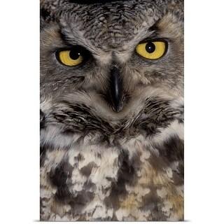 Poster Print entitled Owl