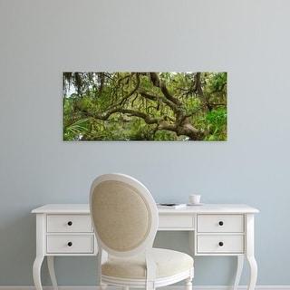 Easy Art Prints Panoramic Image 'Tree on South Creek in Oscar Scherer Park, Nokomis, Sarasota, Florida' Canvas Art