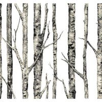 York Wallcoverings LL4758 Urban The Birches Wallpaper - White
