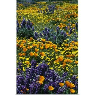 """""""Poppy and lupine flowers blooming in field, California"""" Poster Print"""