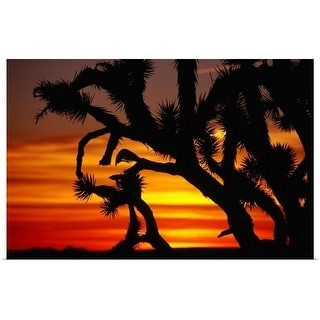 """Joshua trees silhouetted at sunset"" Poster Print"
