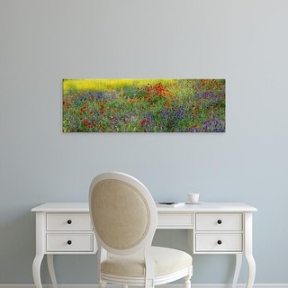 Easy Art Prints Panoramic Images's 'Poppies Spain' Premium Canvas Art