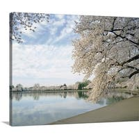 Premium Thick-Wrap Canvas entitled Cherry Blossom trees around the tidal basin, Washington DC