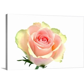 """Pink rose"" Canvas Wall Art"