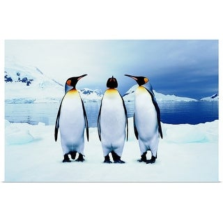 """Three King Penguins"" Poster Print"