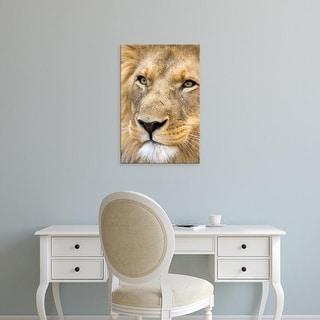 Easy Art Prints Joe Restuccia III's 'African Male Lion 2' Premium Canvas Art
