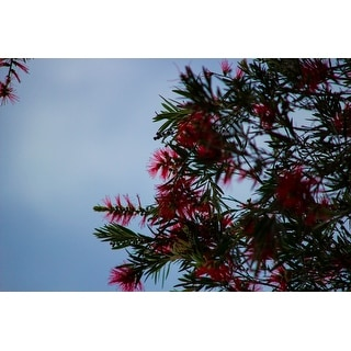 Red Plant And Tree Photograph Art Print
