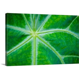 """""""Close-up of plant"""" Canvas Wall Art"""