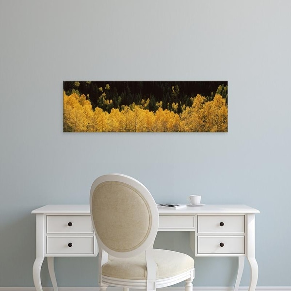 Easy Art Prints Panoramic Images's 'Aspen trees in a forest, Telluride, San Miguel County, Colorado, USA' Canvas Art
