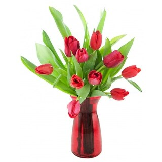 KaBloom 10 Red Tulips Farm-Fresh from Holland with Vase