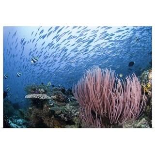 """""""Coral reef, Indonesia, Raja Ampat"""" Poster Print"""
