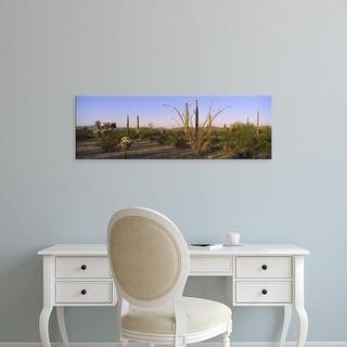 Easy Art Prints Panoramic Images's 'Cactus plants, Organ Pipe Cactus National Monument, New Mexico-Arizona' Canvas Art
