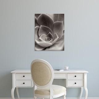 Easy Art Prints Alan Blaustein's 'Florison #25' Premium Canvas Art