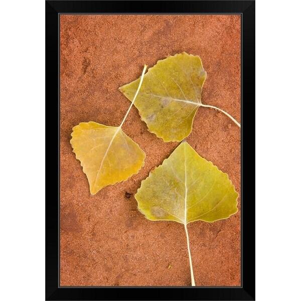 """Cottonwood leaves"" Black Framed Print"