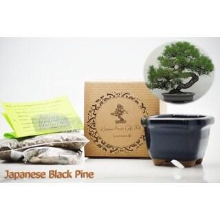 9GreenBox - Bonsai Seed Kit -Grow Japanese Black Pine Bonsai from Seed