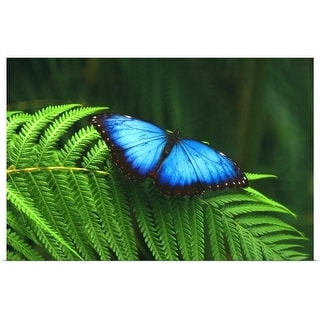 """""""Blue butterfly"""" Poster Print"""