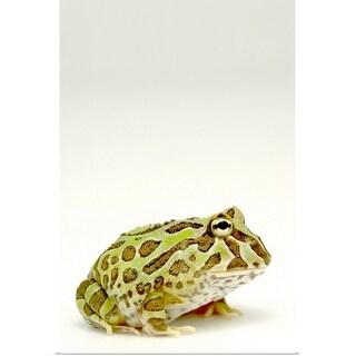 """Frog, close up"" Poster Print"